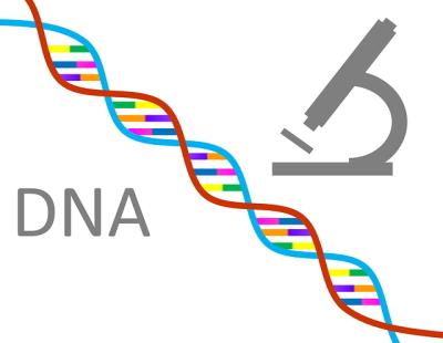 DNA解析
