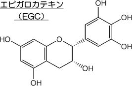 エピガロカテキン(EGC)