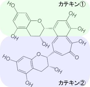 カテキンの2つの分子が結合して生成されるテアフラビン