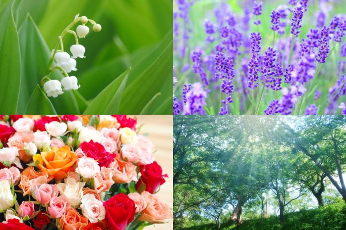 スズラン、ラベンダー、バラ、樹木