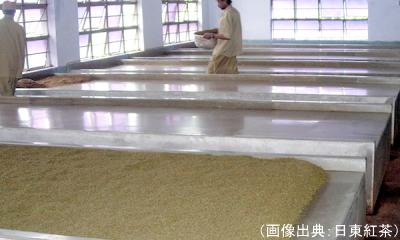 発酵(紅茶)