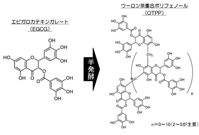 エピガロカテキンガレートとウーロン茶重合ポリフェノールの化学的な関係