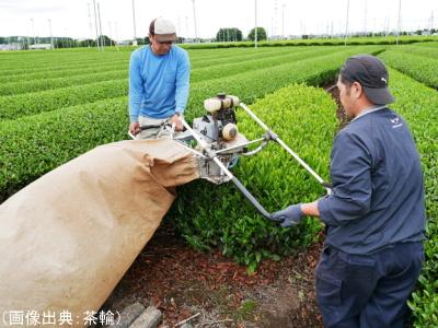 機械による茶摘み(バリカン型)