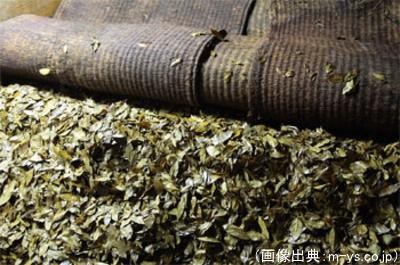 碁石茶のカビ付け