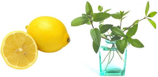レモン、ハッカ