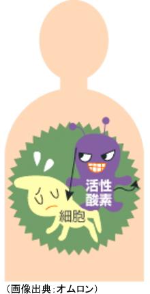 細胞を傷つける活性酸素